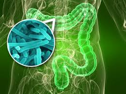 bacterias intestinales 1